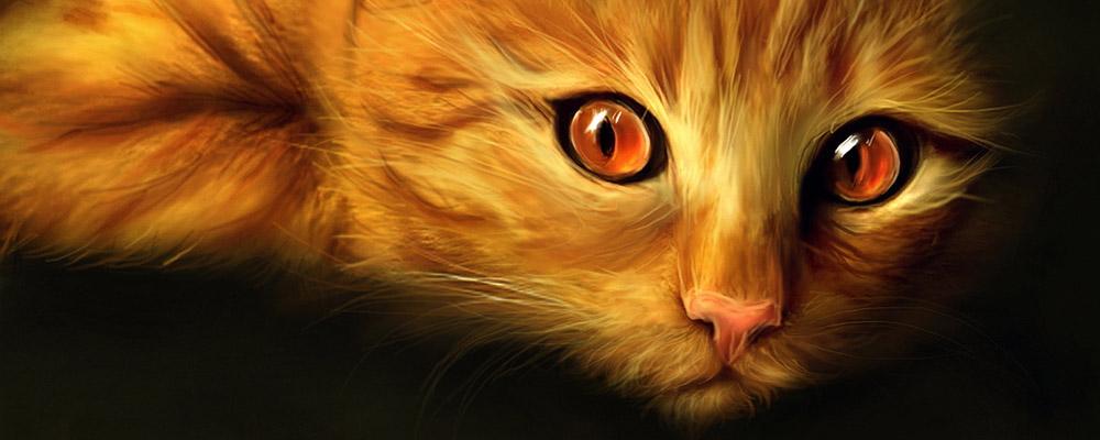 Mèo hoang và gã bụi đời