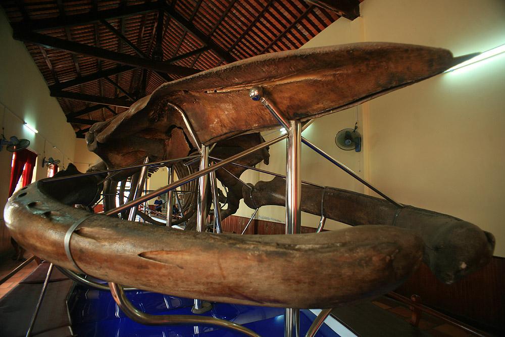 Chùm ảnh: Dinh vạn Thủy Tú – nơi lưu giữ bộ xương cá voi lớn nhất Việt Nam