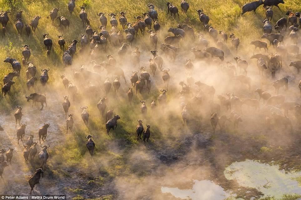 Chùm ảnh: Thế giới động vật châu Phi đẹp mê hồn nhìn từ trên cao