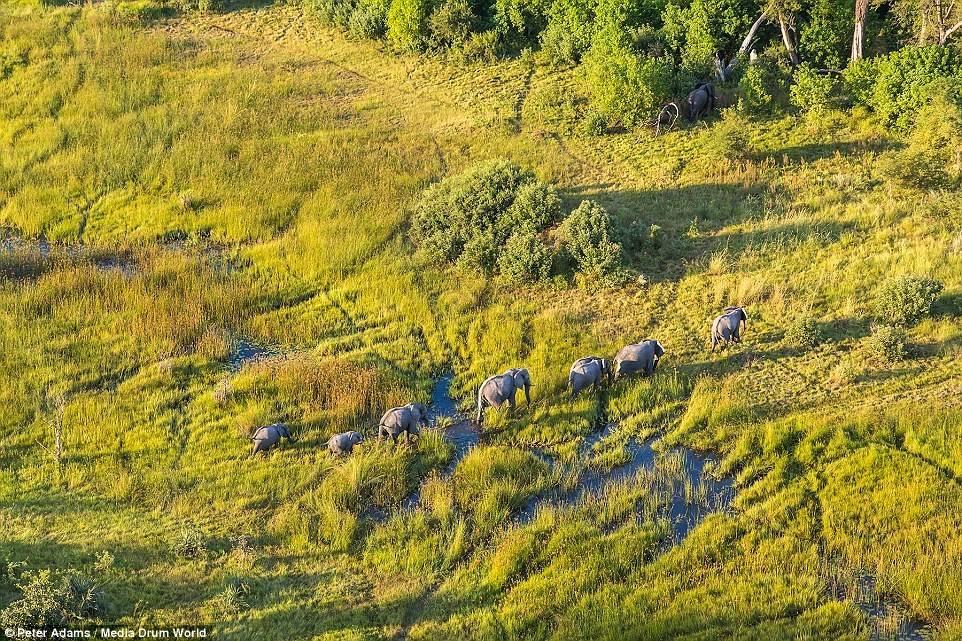 Đồng bằng sông Okavango là một trong bảy kỳ quan thiên nhiên của châu Phi và trở thành địa danh thứ 1.000 được liệt kê vào danh sách di sản thế giới của UNESCO vào tháng 6/2014.