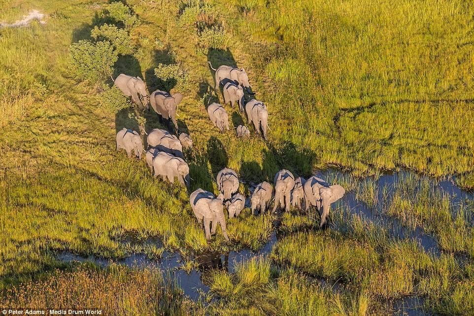 Đây là nơi sinh sống của nhiều loài động vật khác nhau như voi, hươu cao cổ, hà mã và ngựa vằn…