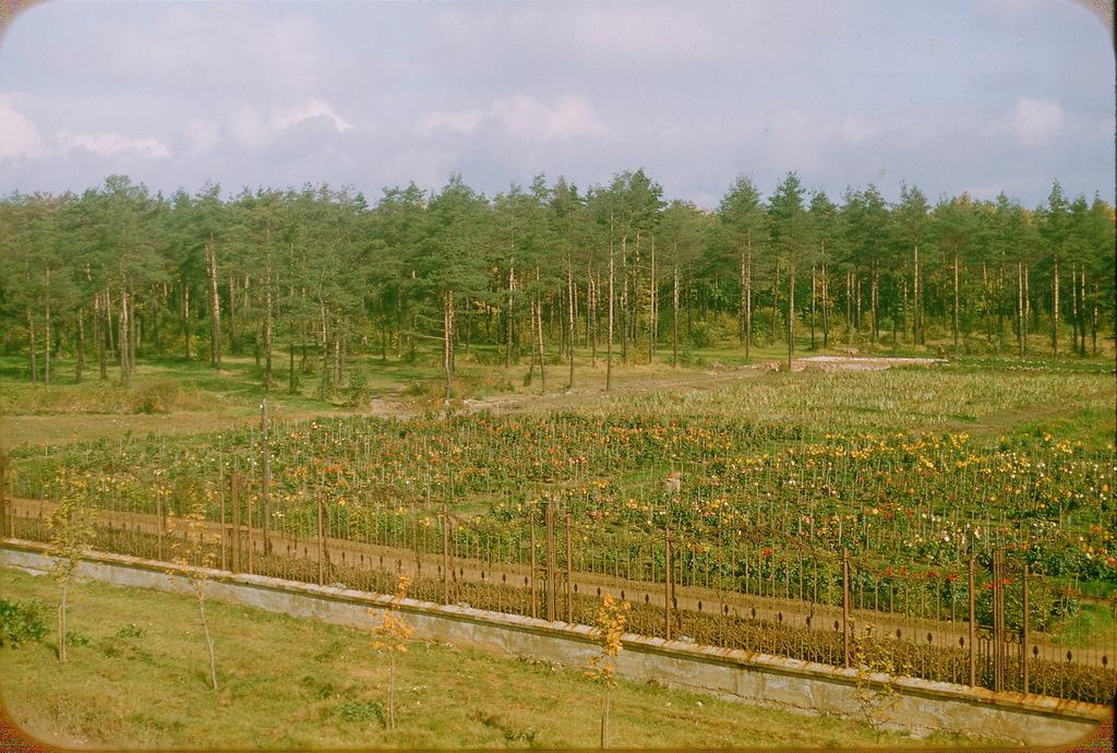 Экспериментальный сад в пригороде Москвы