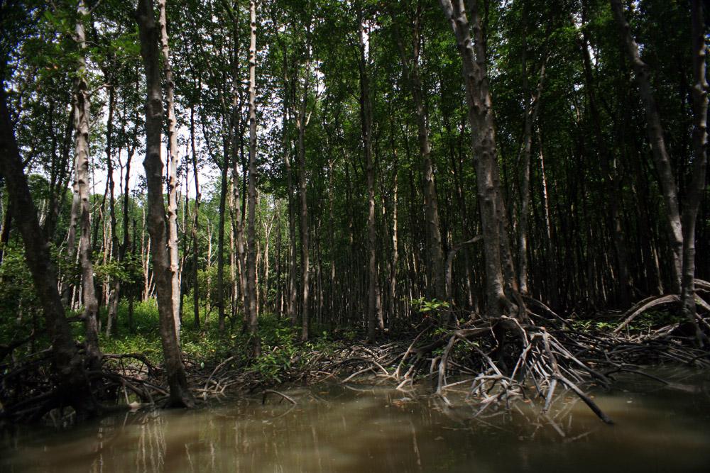 Điều cần biết về vai trò của rừng trong phòng chống thiên tai