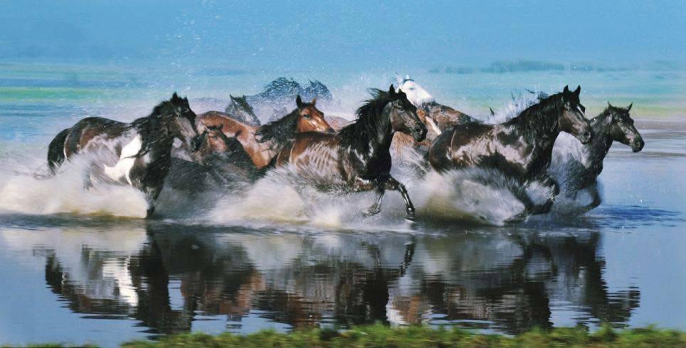 Hình ảnh ngựa phi tuyệt đẹp trên thảo nguyên Mông Cổ