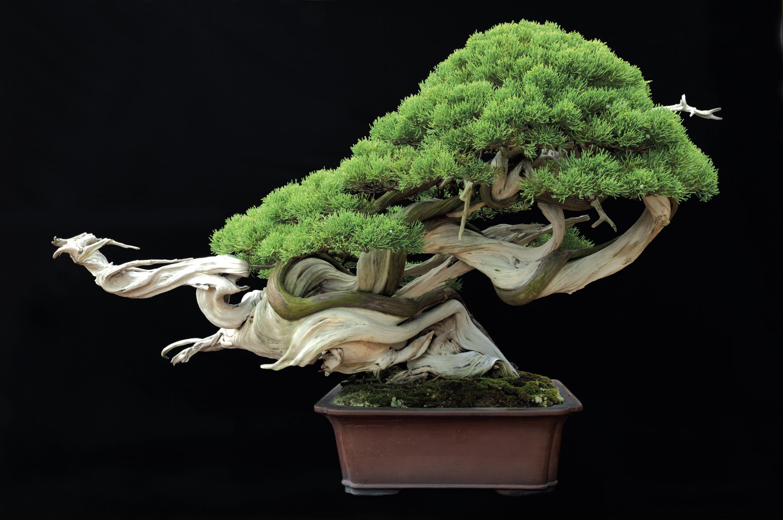 Những nét khái quát về nghệ thuật Bonsai Nhật Bản