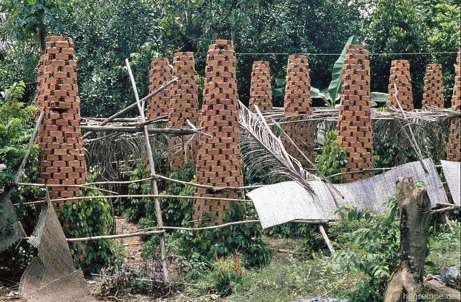 Củ cải đường cho cây tiêu
