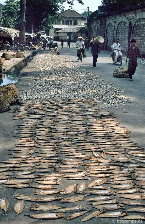 Hà Nội-Altstadt: cá được sấy khô trên đường