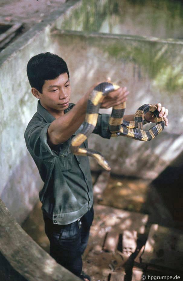Trại rắn Don Tâm