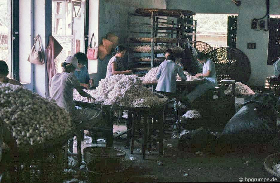 Đà Nẵng: Nhà máy sản xuất thảm - sắp xếp quan tài bằng tơ tằm