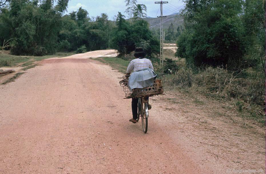 Chó trong giỏ trên xe đạp