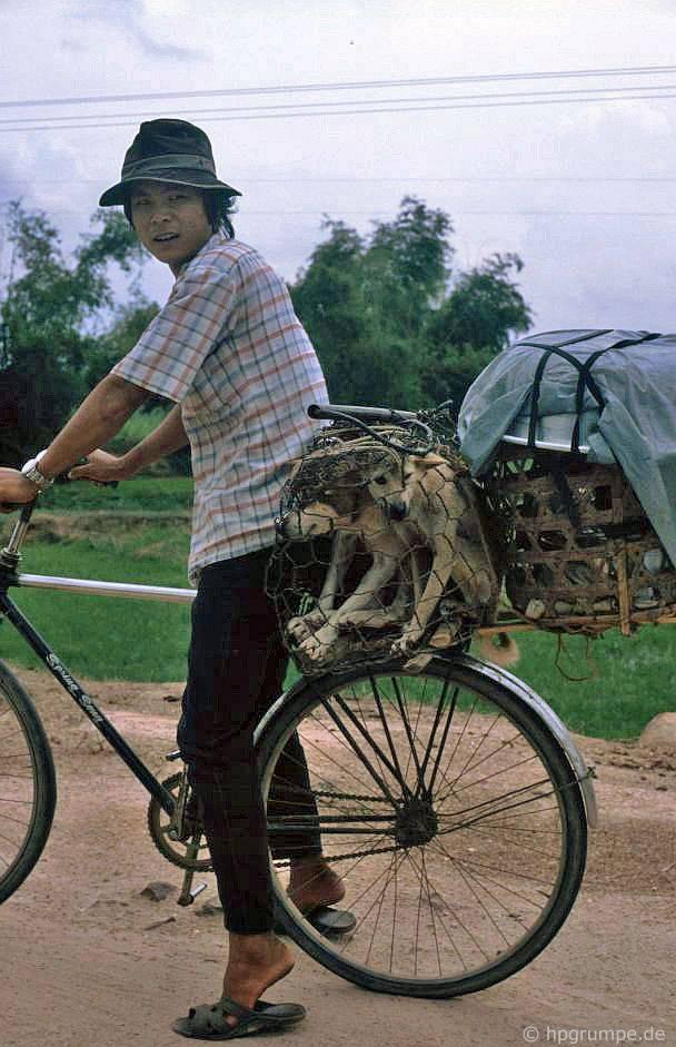 Trên đường đến chợ: thịt chó tươi