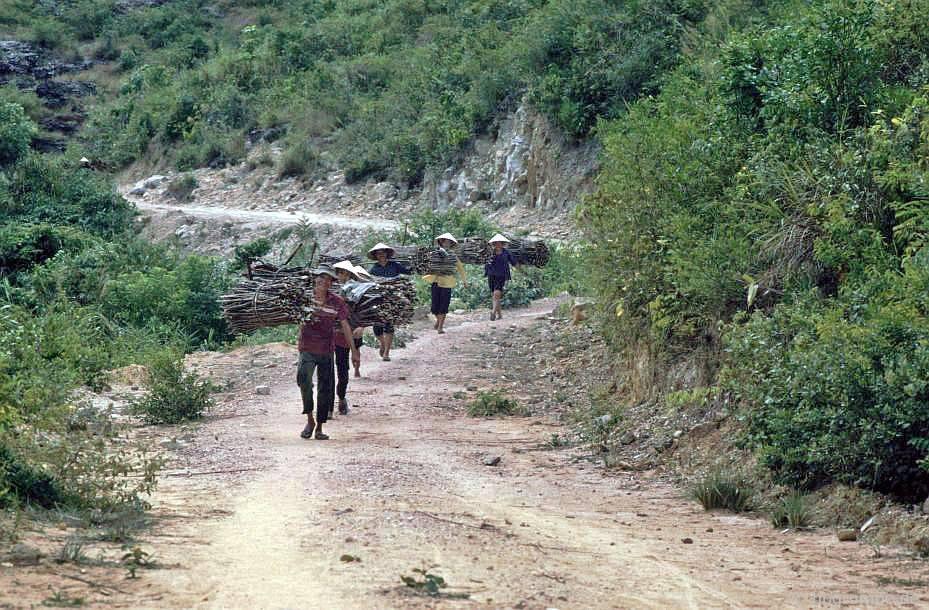 Con đường đến Mỹ Sơn: gặp gỡ những người thu gom gỗ