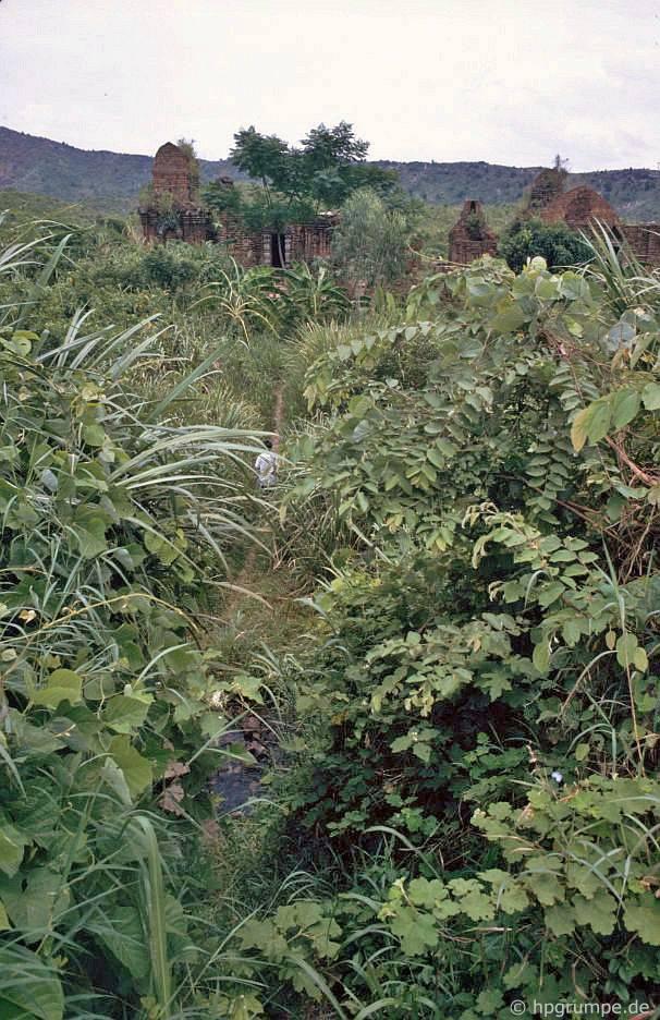 Mỹ Sơn: đi xuyên qua bụi rậm và cỏ