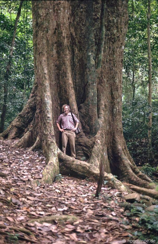 Vườn Quốc gia Cúc Phương: cây rừng