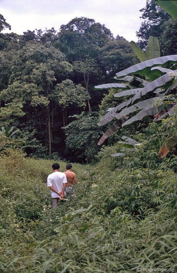 Vườn Quốc gia Cúc Phương: Jungle trek