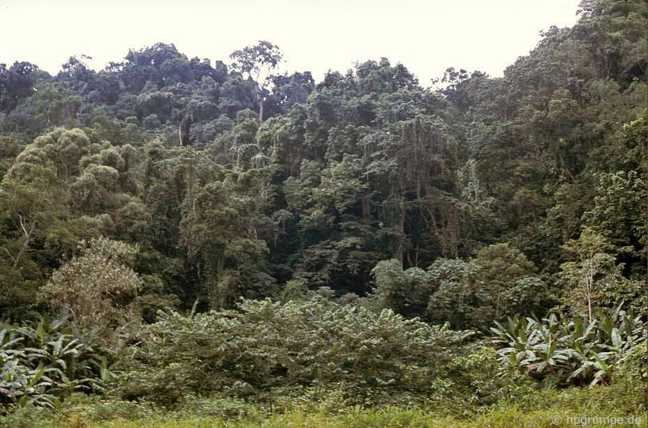 Vườn Quốc gia Cúc Phương: rừng rậm