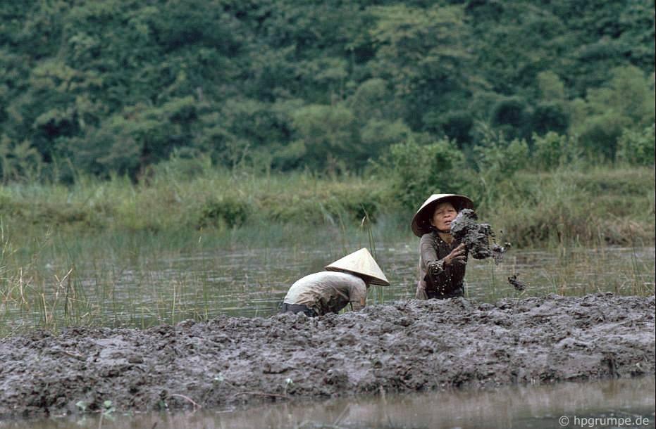 Trên kênh rạch đến chùa nước hoa: công việc ngoài đồng