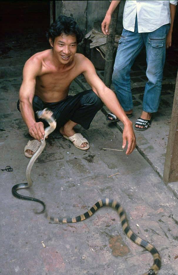 Lê Mát: thương nhân rắn