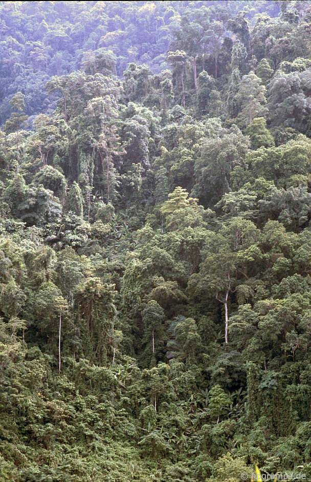 Phần còn lại của rừng nhiệt đới trên Đường mòn Hồ Chí Minh