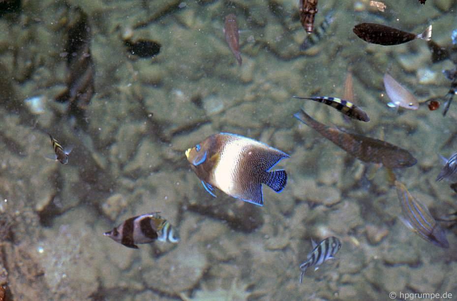 Đảo Hòn Miễu, cá nhiệt đới
