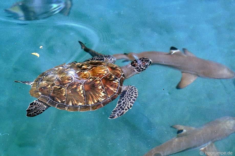 Đảo Hòn Miễu: rùa biển và cá mập