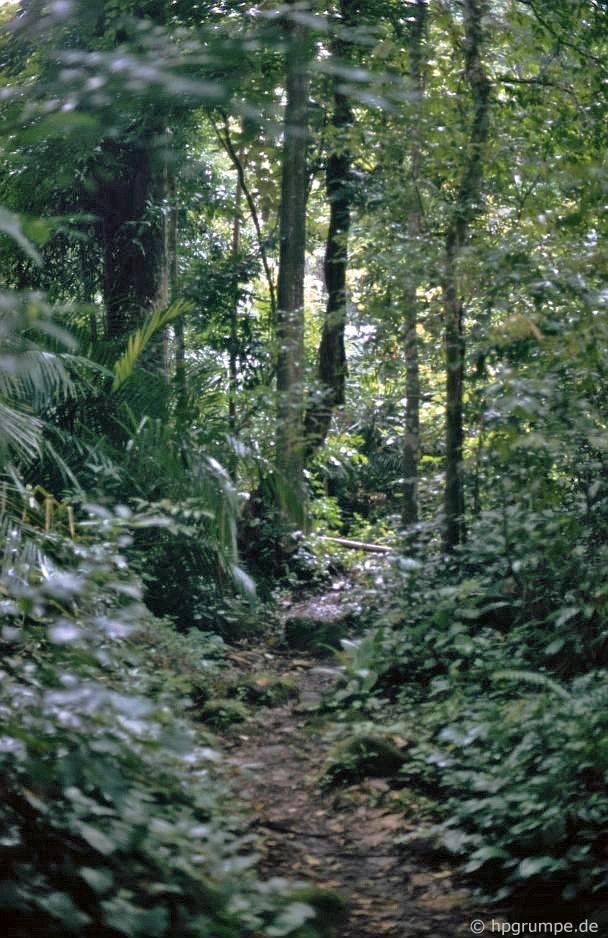 Rừng tại thác Dray Sap