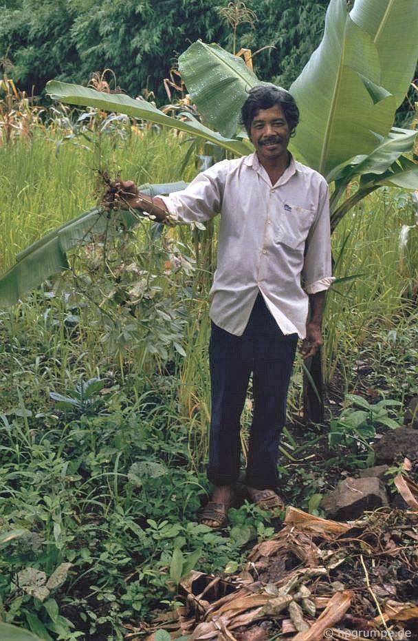 Làng Ede Tom Tua: Nông dân Đậu phộng