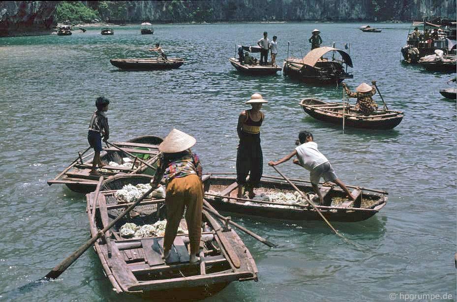 Vịnh Hạ Long: thuyền của người bán san hô