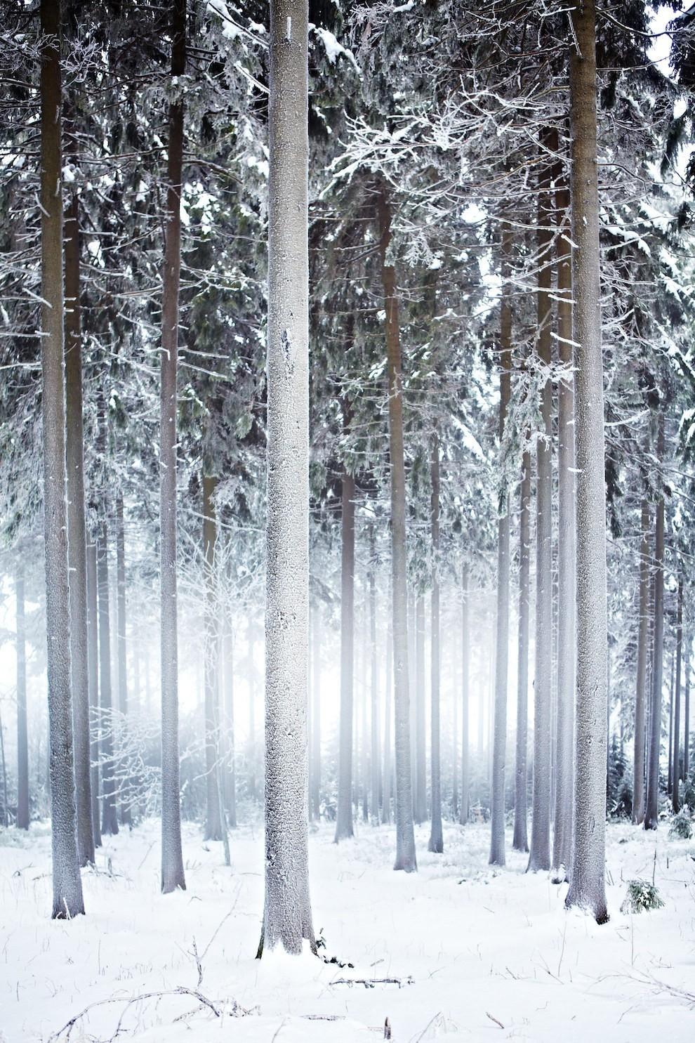 Thuringia ở Đức đẹp nhất vào mùa đông khi bao trùm lên tất cả là màu tuyết trắng tinh khôi, cây cối vương trên mình những bông tuyết chưa kịp tan.
