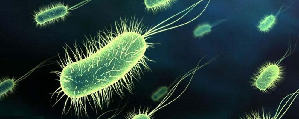 Sự vô hiệu của kháng sinh: Thảm họa đang cận kề