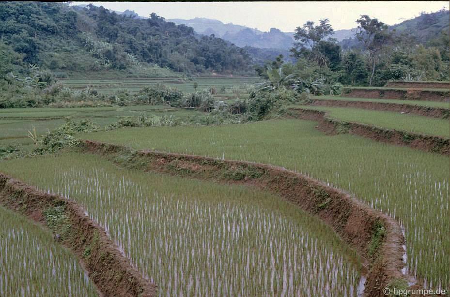 Hòa Bình: ruộng lúa