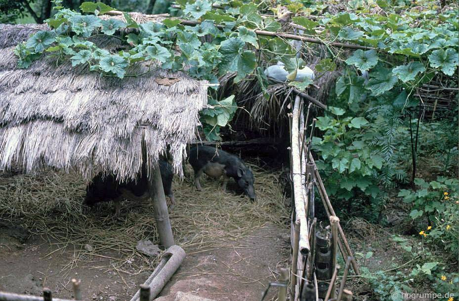 Hòa Bình: Nhà của Mường - Chuồng Ngựa