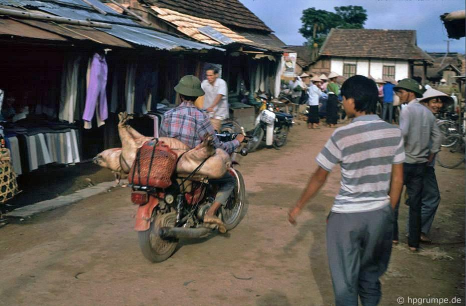 Điện Biên: thị trường - vận chuyển lợn