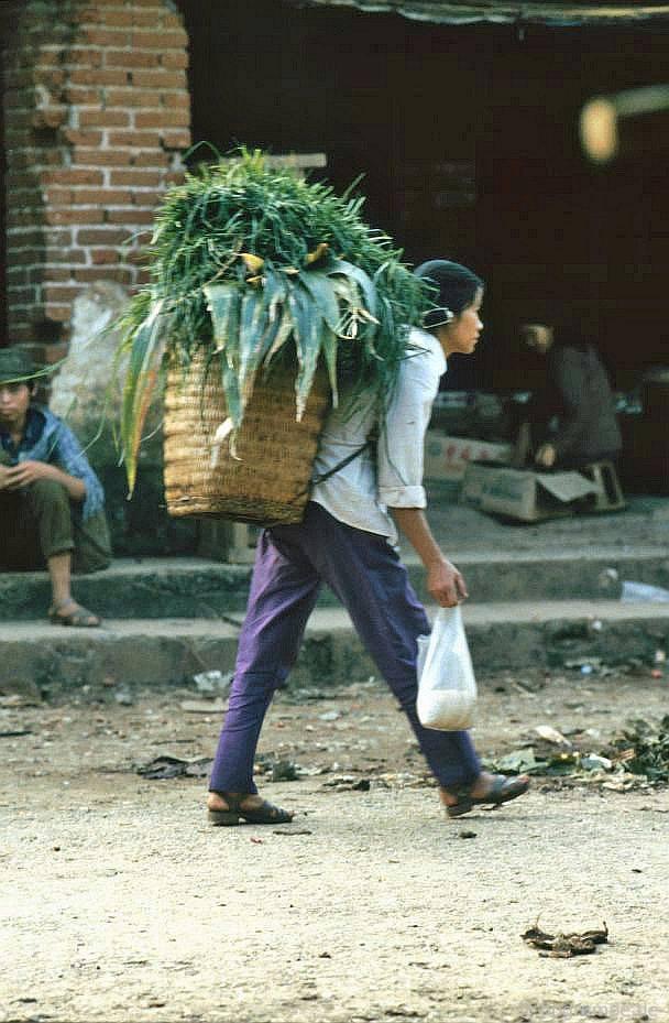 Sa Pa: vận chuyển cây xanh