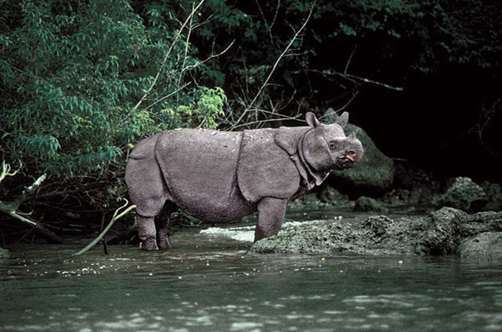 Cái chết đau đớn của con tê giác cuối cùng ở Việt Nam