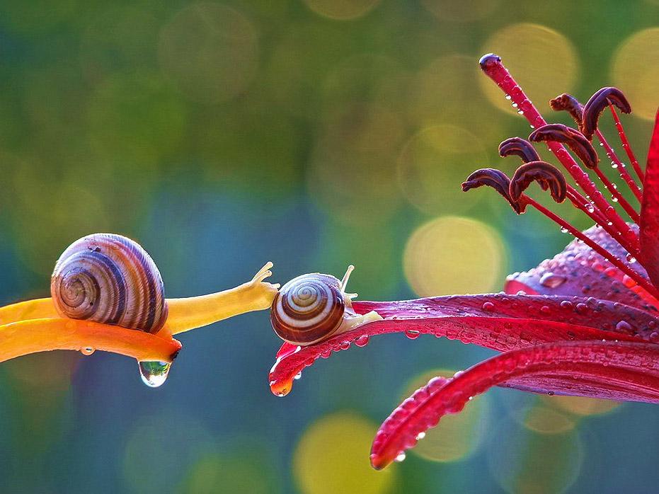 Những hình ảnh đẹp mê hồn về thế giới của loài ốc sên