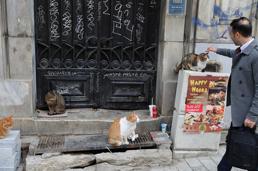 Istanbul: Thanh pho meo chia doi bo Au - A hinh anh 4