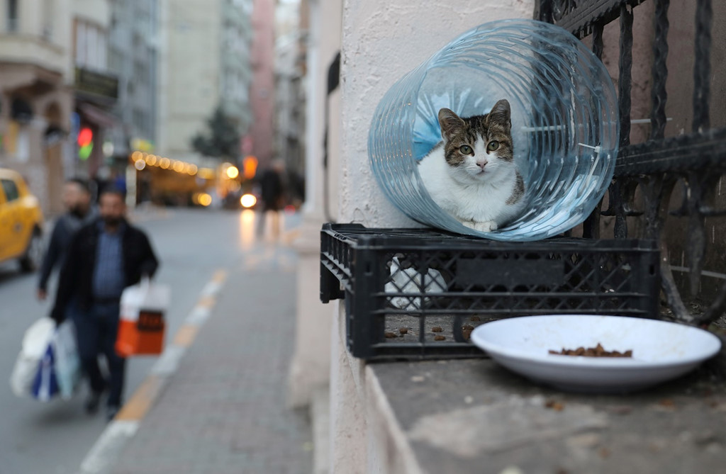 Istanbul: Thanh pho meo chia doi bo Au - A hinh anh 1