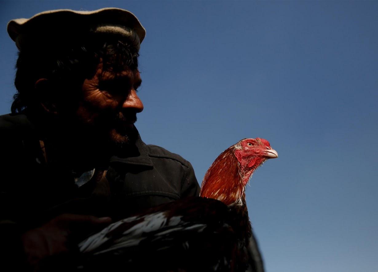 Cho chim o Kabul: Noi noi buon chien tranh lui lai hinh anh 4