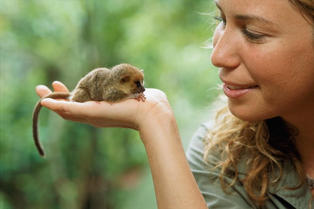 Vượn cáo chuột: Như họ hàng của mình, loài vượn cáo nhỏ bé này ăn hoa quả và thực vật. Chúng cũng không từ chối các loài côn trùng và bọ nhỏ. Vượn cáo chuột có kích cỡ chỉ nhỉnh hơn ngón tay người và có vẻ ngoài khá dễ thương.