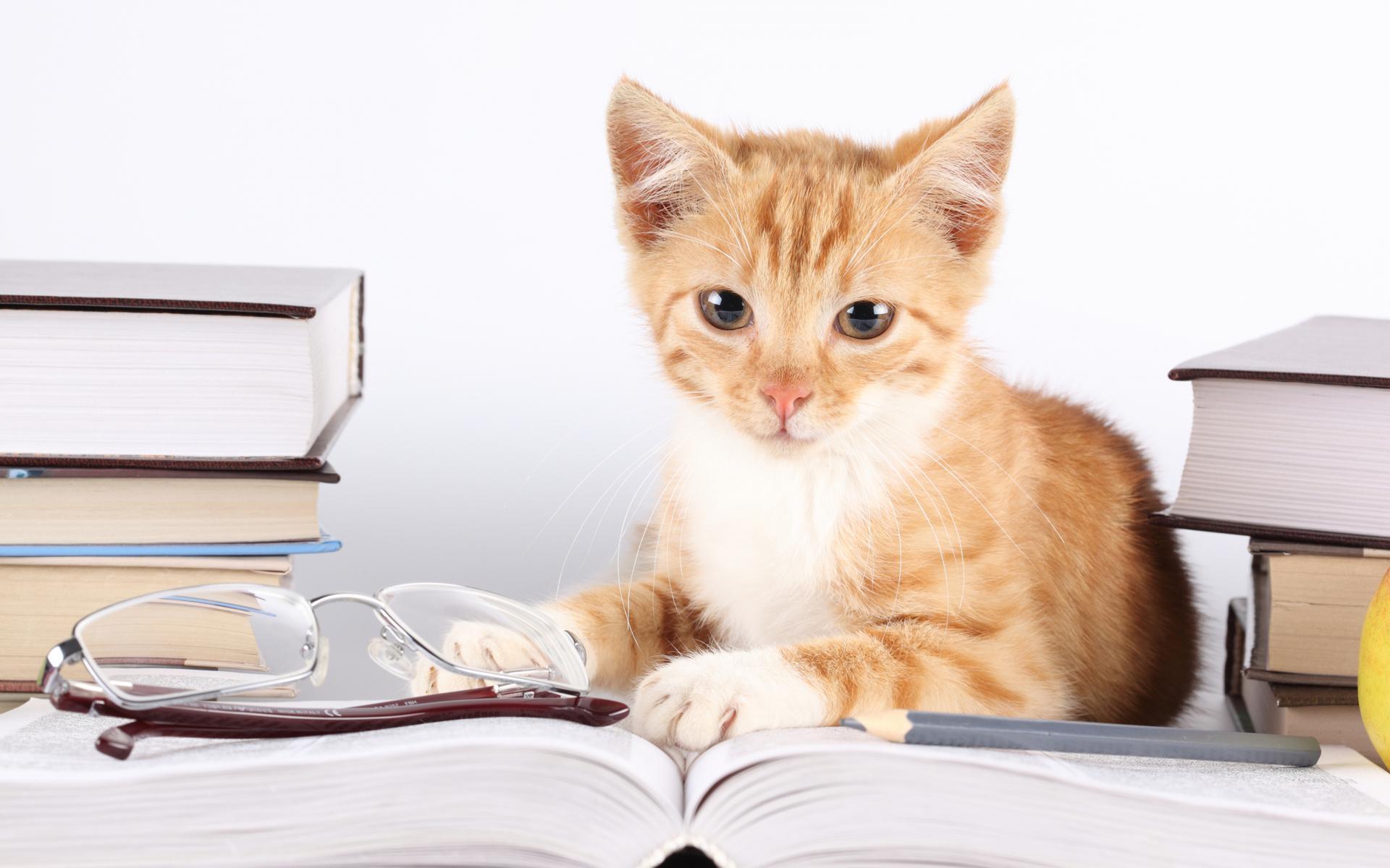 Đừng đọc sách một cách vô tội vạ