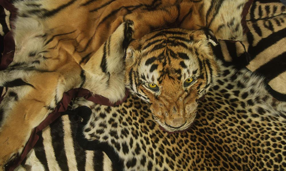 Kinh doanh động vật hoang dã: Kinh doanh sự tuyệt chủng