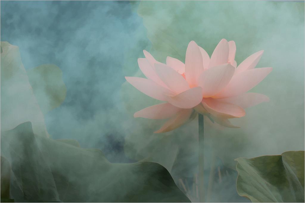 'Ðoá hoa vô thường' và nghệ thuật ca từ của Trịnh Công Sơn