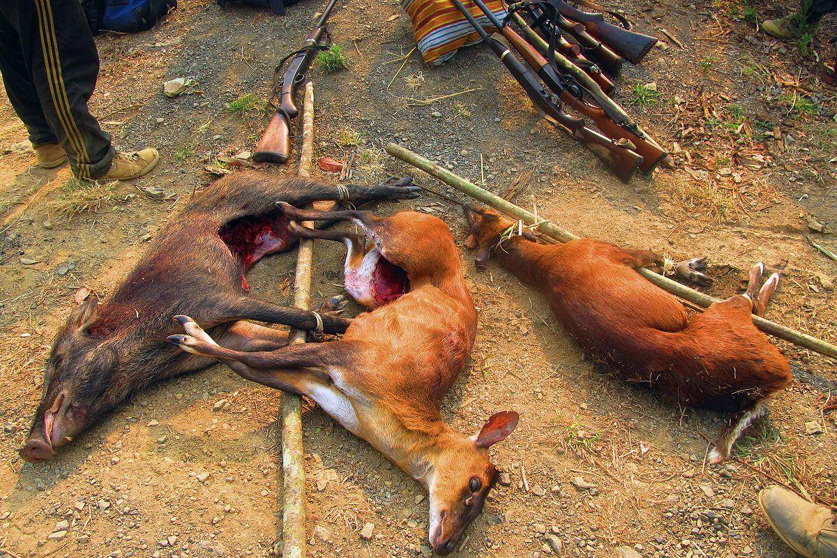 Vì sao chúng ta không nên ăn thịt thú rừng?