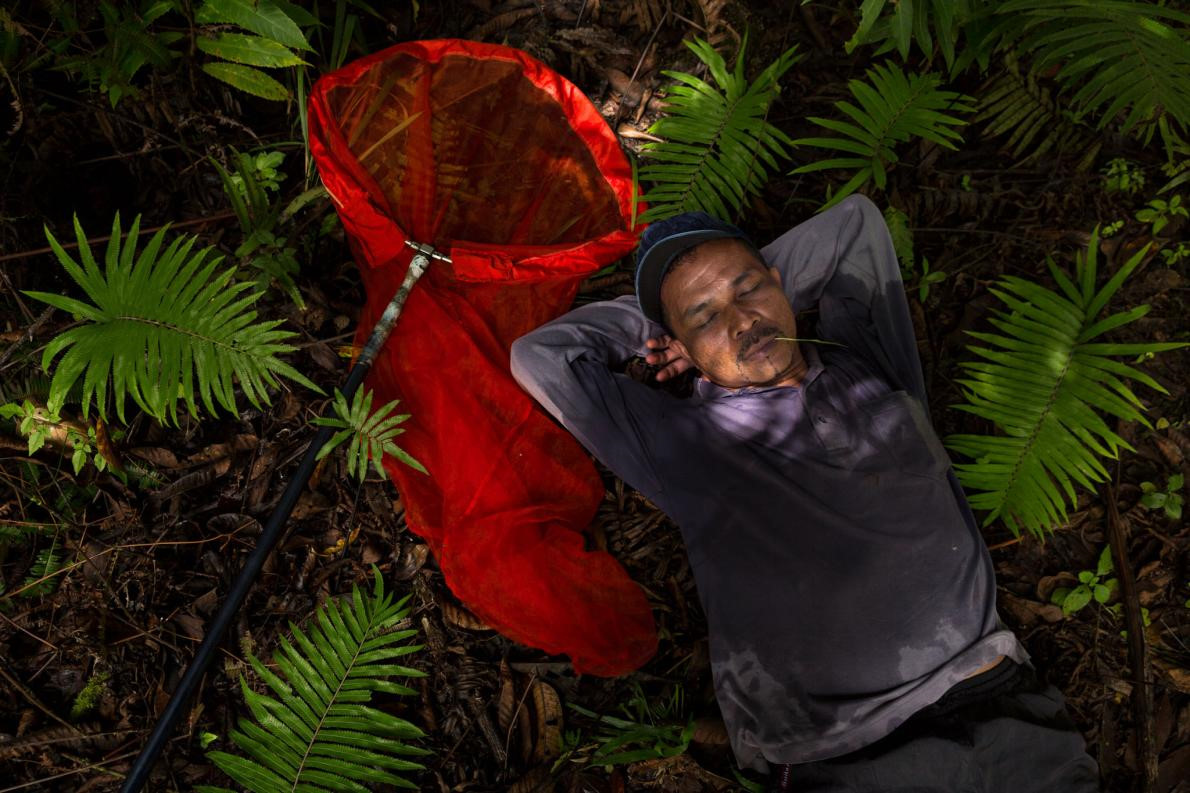 Nhung nguoi san buom bi an o Indonesia hinh anh 3