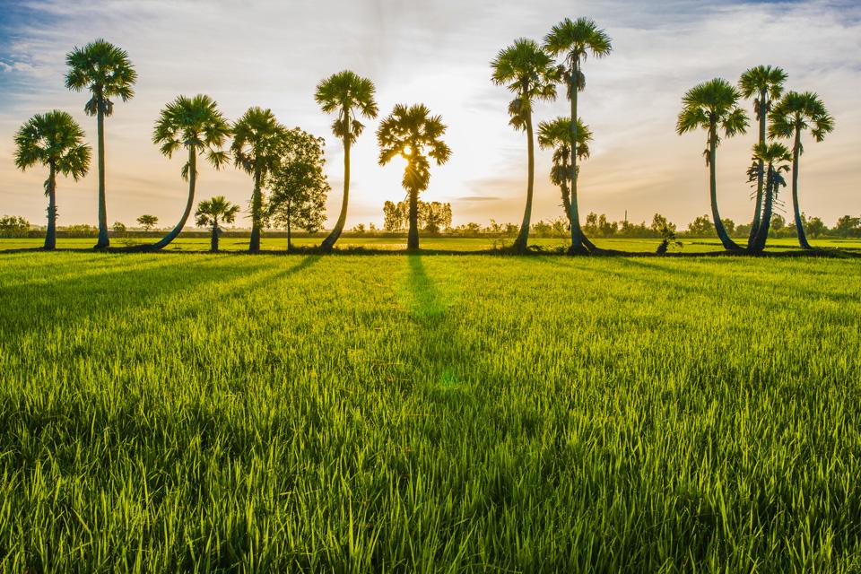 Sự hình thành đường biên giới Việt Nam – Campuchia thời Nguyễn