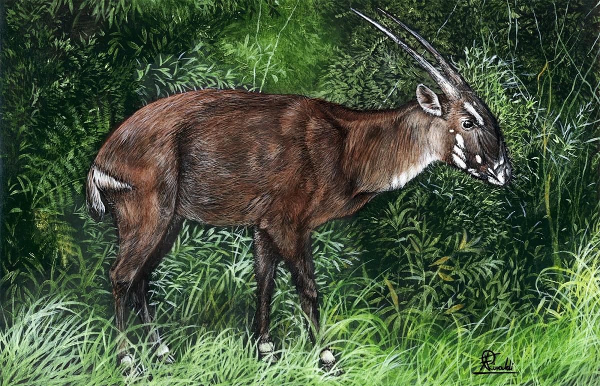 Tình trạng nguy cấp của các loài sinh vật được phân loại thế nào?