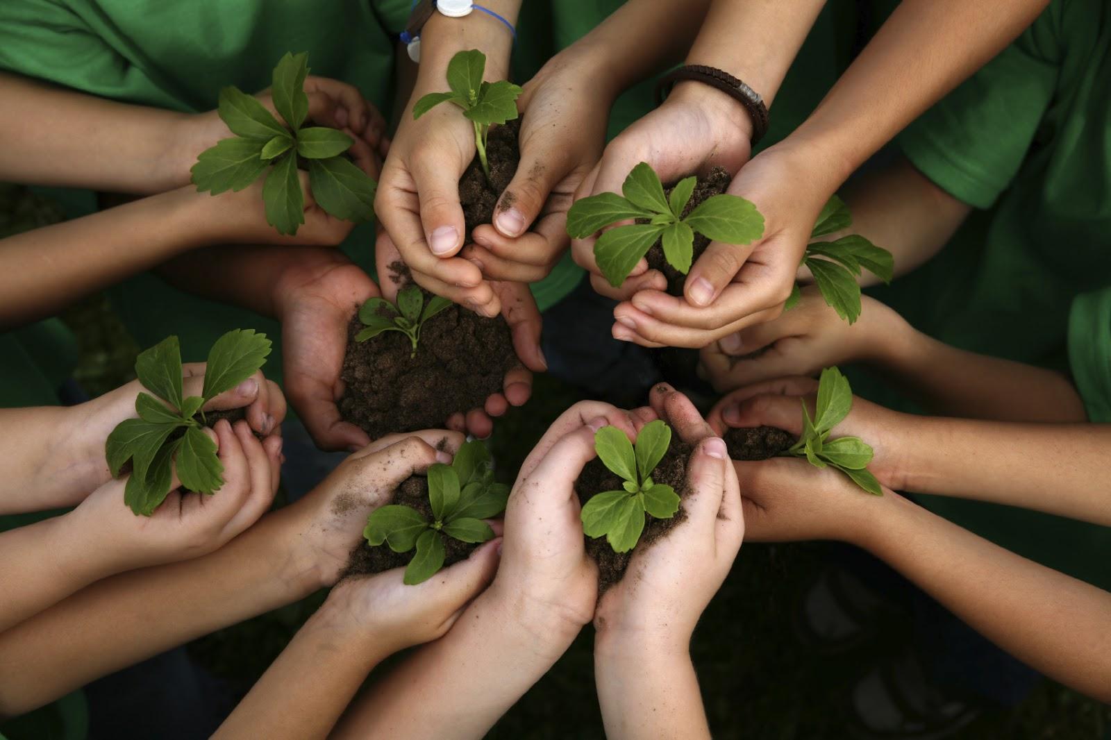 Sao không đưa bộ môn giáo dục môi trường vào chương trình giảng dạy?
