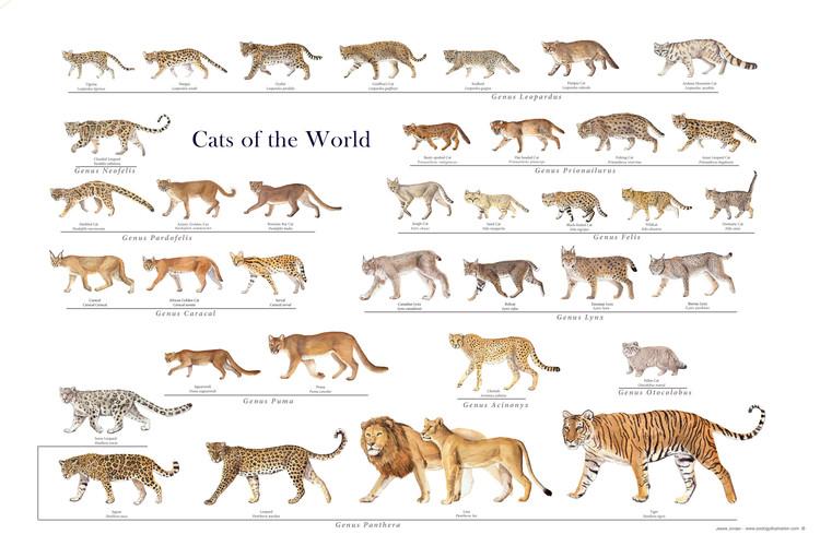 Kiến thức đa dạng sinh học: Một loài mới hình thành thế nào?