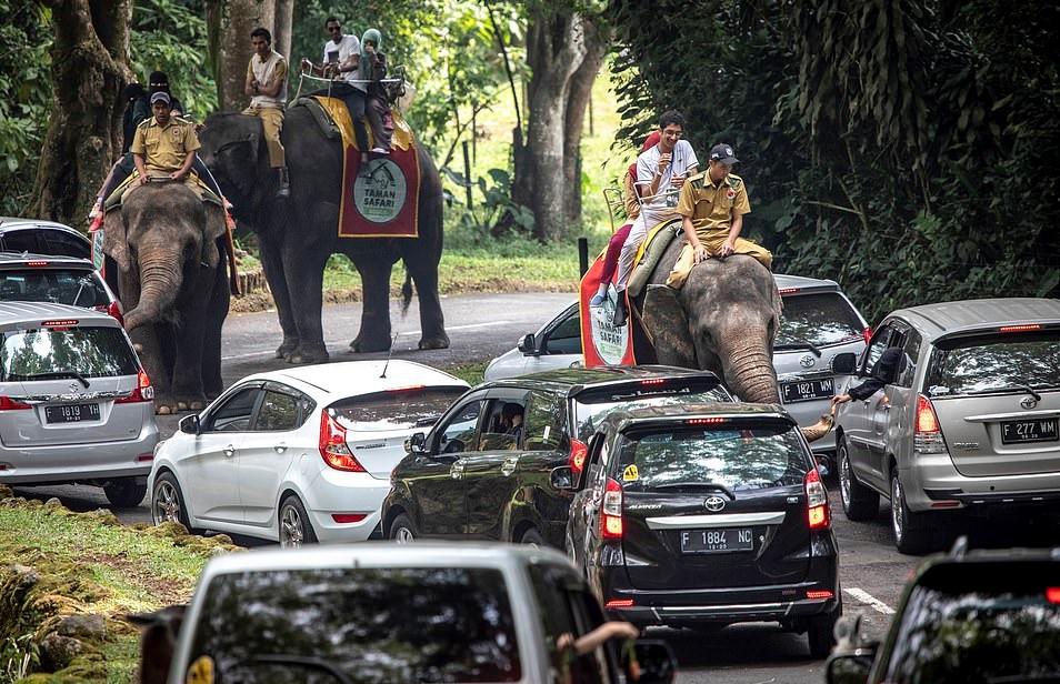 Bao hanh voi truoc mat du khach tai buoi bieu dien xiec o Indonesia hinh anh 10